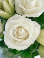 20 Rosas e Lírios Orientais