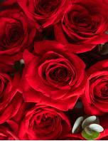 50 Rosas pra Sempre