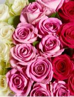 Emily Roses